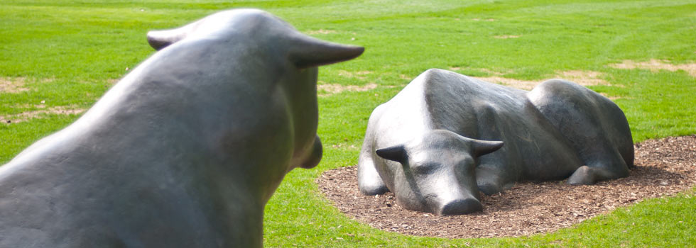 Bull sculptures by Peter Woytuk on the U of M ag campus - Bill Kelley