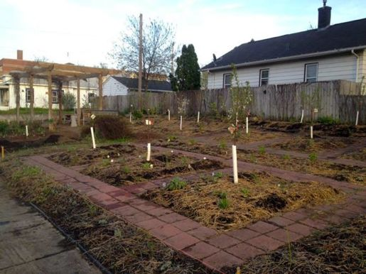 The food forest is planted